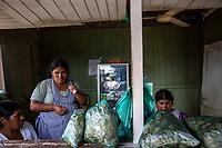 """Female coca growers known as """"cocaleros"""", merchandise coca leaves' in plastic bags for chewing, called in Quechua language """"picchear"""", beside a highway in Entre Rios town, Chapare region, Bolivia. December 02, 2019.<br /> Des cultivatrices de coca appelées """"cocaleros"""", des feuilles de coca en sacs de plastique à mâcher, appelées en langue quechua """"picchear"""", le long d'une autoroute à Entre Rios, région du Chapare, Bolivie. 2 décembre 2019."""