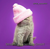 Xavier, ANIMALS, REALISTISCHE TIERE, ANIMALES REALISTICOS, cats, photos+++++,SPCHCATS864,#a#, EVERYDAY
