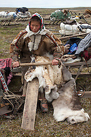 Bovanenkovo ,Yamal Peninsula, Russia, 09/07/2010..Scenes of the Nenets, local nomadic reindeer herders, at their camp, and leaving on sledges heading north to near the northern Russian coast. A Nenets woman treating deerskin that she will use for repairing her chum.