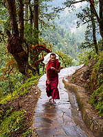 A buddhist monk carries food supplies on his back up the steep mountainside path to Tango Goemba monastery