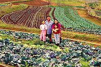 Portrait of the Fujitani family standing in a cabbage patch on their family farm in Kula, Island of Maui
