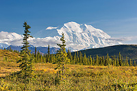 The Summit Of Mt. Denali Rises Above The Tundra And Taiga In Denali National Park, Alaska.