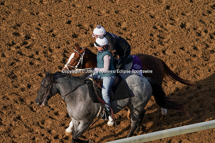 November 5, 2020: Just Might, trained by trainer Michelle Lovell, exercises in preparation for the Breeders' Cup Turf Sprint at Keeneland Racetrack in Lexington, Kentucky on November 5, 2020. John Voorhees/Eclipse Sportswire/Breeders Cup/CSM