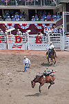 Male rider on horse during the bareback bronc riding competition during the Calgary Stampede, Calgary, Alberta, Canada