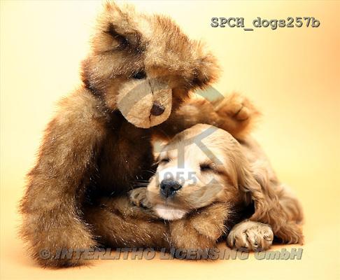 Xavier, ANIMALS, dogs, photos(SPCHdogs257b,#A#) Hunde, perros