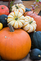 Gourds and pumpkins for fall harvest, picked variety of different kinds together