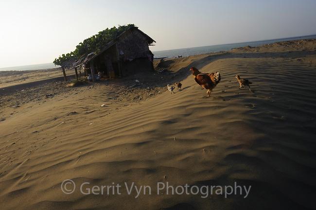 Chickens in a barrier island village. Rakhine State, Myanmar.