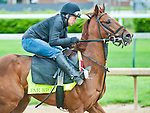 April 26, 2015: Far Right, trained by Ron Moquett exercises in preparation for the 141st Kentucky Derby at Churchill Downs in Louisville, Kentucky. John Voorhees/CSM