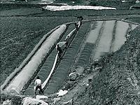 Landwirtschaft in Sunchoni, Korea 1977