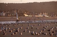 Europe/France/Normandie/14/Calvados/Deauville: Char à voile sur la plage dans la lumière du soir