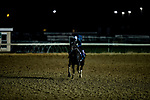 October 31, 2018 : Robert Bruce (CHI), trained by Chad C. Brown, exercises in preparation for the Breeders' Cup Turf  for the Breeders' Cup Turf  at Churchill Downs on October 31, 2018 in Louisville, Kentucky. Evers/ESW/Breeders Cup