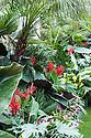 Lush Side of Juxtaposition Garden, designed by Jack Dunckley, Silver Gilt medal winner, RHS Chelsea Flower Show 2013. Plants include: Phoenix roebelenii, Trachycarpus wagneriana, Philodendron 'Xanadu', Zantedeschia aethiopica.