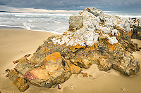 Rock formation and brooding skies on beach near Nugget Point, Catlins, Southland, New Zealand
