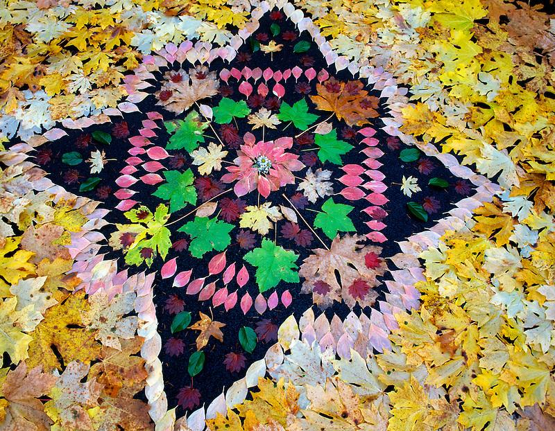 Fall leaf art design in parking lot on Quartzville Creek, Oregon