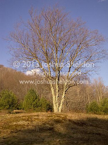 Tall tree<br />