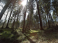 FOREST_LOCATION_90197