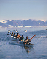 Inuit Hunters in kayaks return to shore towing a narwhal, Monodon monoceros, they have harpooned. Qaanaaq. NW Greenland, Arctic