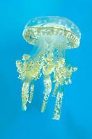 Invertebrates: crustaceans-fish