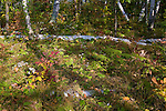 Forest floor in fall