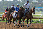 DEL MAR, CA  AUGUST 4: #2 Sassy Little Lila, ridden by Tyler Baze, and #1 Beau Recall, ridden by Corey Nakatani, in the post parade before the Yellow Ribbon Handicap (Grade ll) on August 4, 2018 at Del Mar Thoroughbred Club in Del Mar, CA.(Photo by Casey Phillips/Eclipse Sportswire/ Getty Images)