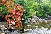 Early signs of autumn along the Wild Ammonoosuc River in Easton, New Hampshire during the summer months.
