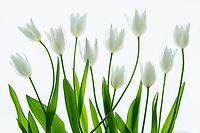 Boquet of tulips.