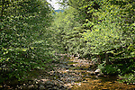 Evans Brook runs through the White Mountain National Forest in western Maine.
