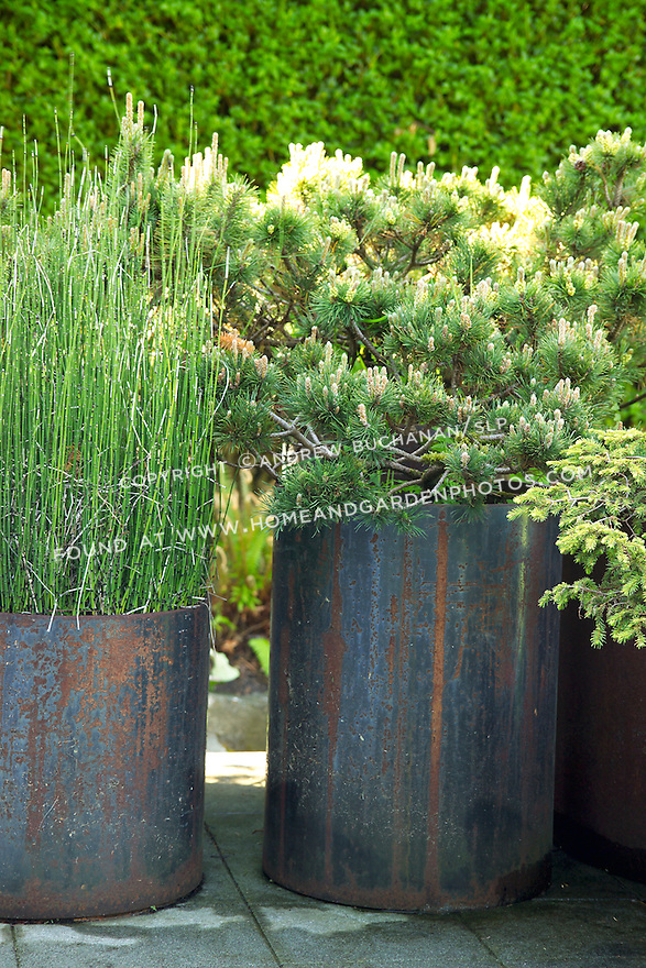 A cluster of rusted metal pots,of varying heights, each with a single plant.