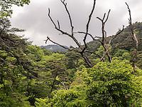 Wald beim buddhistischen Tempel Heinsa nahe Daegu, Provinz Gyeongsangnam-do, Südkorea, Asien<br /> forest at temple heinsa near Daegu,  province Gyeongsangbuk-do, South Korea, Asia