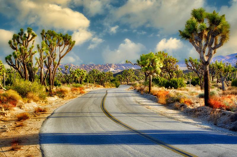 Road in Joshua Tree National Park. California