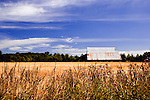 Hay fields in Sequim, Washingtion, whichs hosts an annual Lavender Festival in mid July.  Hay farming, dairies, Olympic National Park, Dungeness Spit, and Wolf Haven are additional attractions.  Recreation is endless. Olympic Peninsula