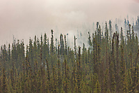 Thick forest fire smoke along the James Dalton highway, bridge crossing the Yukon River, Alaska.