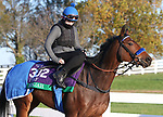 Donjah, trained by trainer Henk Grewe, exercises in preparation for the Breeders' Cup Turf at Keeneland Racetrack in Lexington, Kentucky on November 3, 2020.