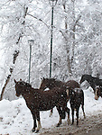 Caballos de Farellones / Farellones, Chile<br /> <br /> Horses of Farellones / Farellones, Chile<br /> <br /> Edición limitada de 10 | Fine Art