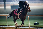 DUBAI, UAE - MARCH 23: Master Plan on the track at Meydan Race Track in preparation for the Dubai World Cup Race on March 23, 2017 in Dubai, UAE. (Photo by Douglas DeFelice/Eclipse Sportswire/Getty Images)