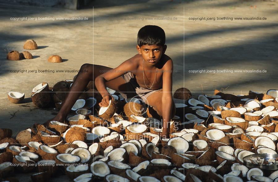 INDIA, Karnataka, Mangalore, boy drying coconut in sun, from coprah the dried meat of coconut kernel later coconut oil will be pressed / INDIEN Karnataka, Trocknung von Kokosnuessen in Sonne auf Plantage bei Mangalore, aus dem trocknen Kokosfleisch, Kopra, wird anschliessend Kokosoel gepresst