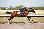 #133Fasig-Tipton Florida Sale,Under Tack Show. Palm Meadows Florida 03-23-2012