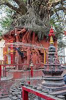 Nepal, Kathmandu.  Tree Growing Atop Hindu Shrine.  Hindus tie string around banyan trees in hope of good fortune.