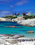 South Africa, near Cape Town, Simon's Town : Boulders Beach - Jackass penguins (Spheniscus demersus)