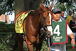 July 12, 2014: Delaware Handicap contender Gamay Noir in the paddock before the race. Belle Gallantey, Jose Ortiz up, wins the Grade I Delaware Handicap at Delaware Park in Stanton Delaware. Trainer is Rudy Rodriguez; Owners are Michael Dubb, Bethlehem Stabes LLC and Gary Aisquith ©Joan Fairman Kanes/ESW/CSM