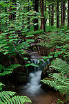 Small brook in the Springtime, Camden Hills State Park, Maine, USA