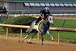 LOUISVILLE, KY - APRIL 20: Mohaymen (Tapit x Justwhistledixie, by Dixie Union) works a bullet 4 furlongs in :46.8 with exercise rider Miguel Jaime, Churchill Downs, Louisville KY. Owner Shadwell Stable, trainer Kieran McLaughlin. (Photo by Mary M. Meek/Eclipse Sportswire/Getty Images)