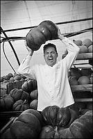 Europe/France/Bretagne/35/ Ille et Vilaine/Pacée: Sylvain Guillemot Chef de l' Auberge du Pont d'Acigné à Noyal-sur-Vilaine, chez Vincent Bocel, GAEC Bocel, agriculteur producteur de légumes biologiques [Non destiné à un usage publicitaire - Not intended for an advertising use]