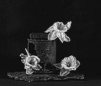Still life with rusted tin can, withering daffodils, and scorched granite