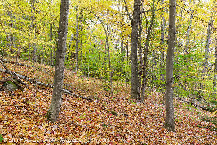 The location of where a dwelling once was at in the abandoned village of Livermore, New Hampshire. This was a logging village in the late 19th and early 20th centuries owned by the Saunders family.