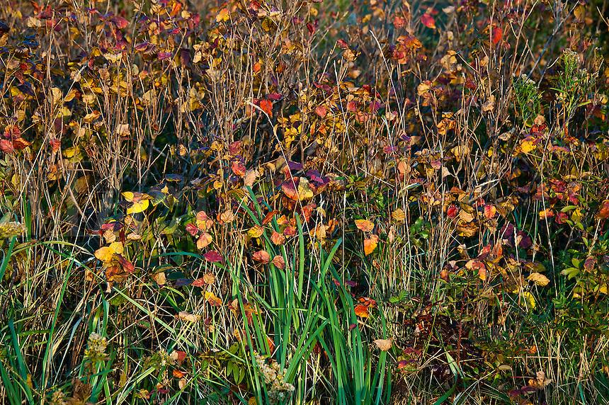 Colorful autumn dune brush.