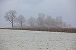 Europa, DEU, Deutschland, Bayern, Oberbayern, Hattenhofen, Schneegestoeber, Schnee, Winter, Typische Landschaft, Baeume, Natur, Umwelt, Landschaft, Jahreszeiten, Stimmungen, Landschaftsfotografie, Landschaften, Landschaftsphoto, Landschaftsphotographie, Wetter, Wetterelemente, Wetterlage, Wetterkunde, Witterung, Witterungsbedingungen, Wettererscheinungen, Meteorologie, Wettervorhersage, <br /> <br /> [Fuer die Nutzung gelten die jeweils gueltigen Allgemeinen Liefer-und Geschaeftsbedingungen. Nutzung nur gegen Verwendungsmeldung und Nachweis. Download der AGB unter http://www.image-box.com oder werden auf Anfrage zugesendet. Freigabe ist vorher erforderlich. Jede Nutzung des Fotos ist honorarpflichtig gemaess derzeit gueltiger MFM Liste - Kontakt, Uwe Schmid-Fotografie, Duisburg, Tel. (+49).2065.677997, ..archiv@image-box.com, www.image-box.com]