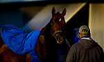 November 3, 2020: Vekoma, trained by trainer George Weaver, exercises in preparation for the Breeders' Cup Sprint at Keeneland Racetrack in Lexington, Kentucky on November 3, 2020. Alex Evers/Eclipse Sportswire/Breeders Cup