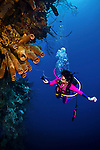 10 June 2014:: SCUBA diver Sally Herschorn inspects a cluster of sponges at Ghost Mountain, off the North Shore of Grand Cayman Island. Located in the British West Indies in the Caribbean, the Cayman Islands are renowned for excellent scuba diving, snorkeling, beaches and banking.  Mandatory Credit: Ed Wolfstein Photo *** RAW (NEF) Image File Available ***