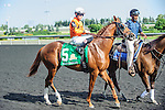 Man o' Bear(5) with Jockey Emma-Jayne Wilson aboard at the 155th Queen's Plate at Woodbine Race Course in Toronto, Canada on July 06, 2014.
